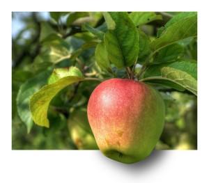 apple-191004_1280
