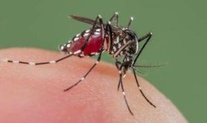 डेंगू बुखार