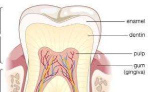 दाँत पीले होने के कारण और उपाय