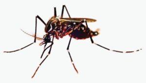 मच्छर ज्यादा क्यों काटते हैं