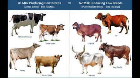 गाय का दूध विलक्षण क्यों
