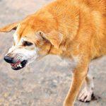रैबीज और कुत्ते का काटना