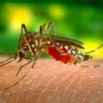 मच्छर से बचने के घरेलु उपाय