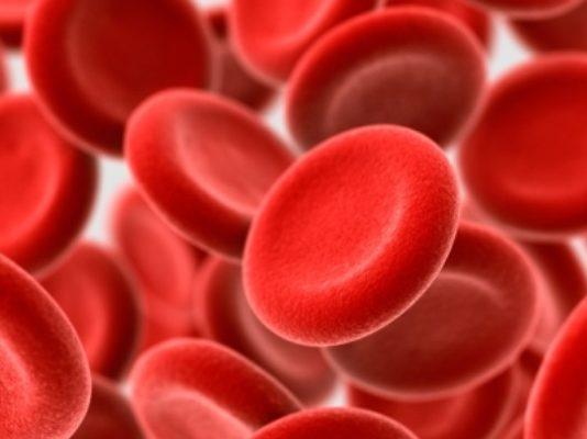 खून रक्त का काम व ब्लड सेल्स