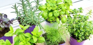 घर के लिए नुस्खे वाले पौधे