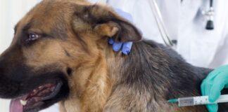 कुत्ते को टीके कब और कोनसे
